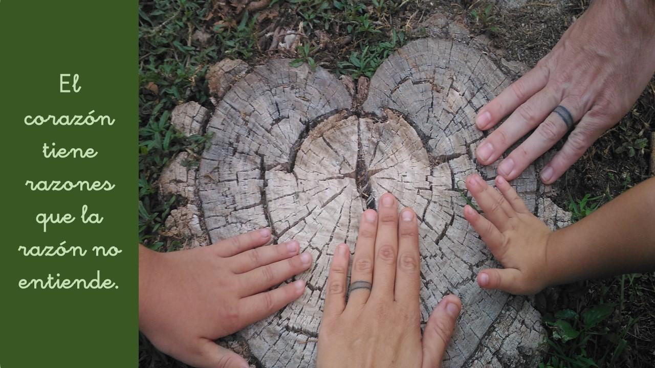Reconoce_tu niño interior_ vanesa_ constela_constelaciones_familiares_servicios